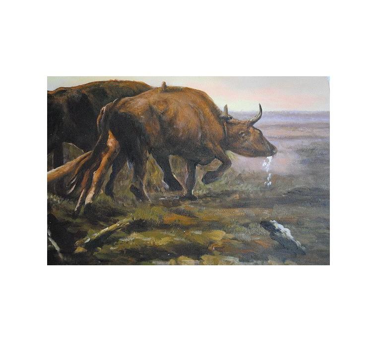 Orka na polu (50x60cm)