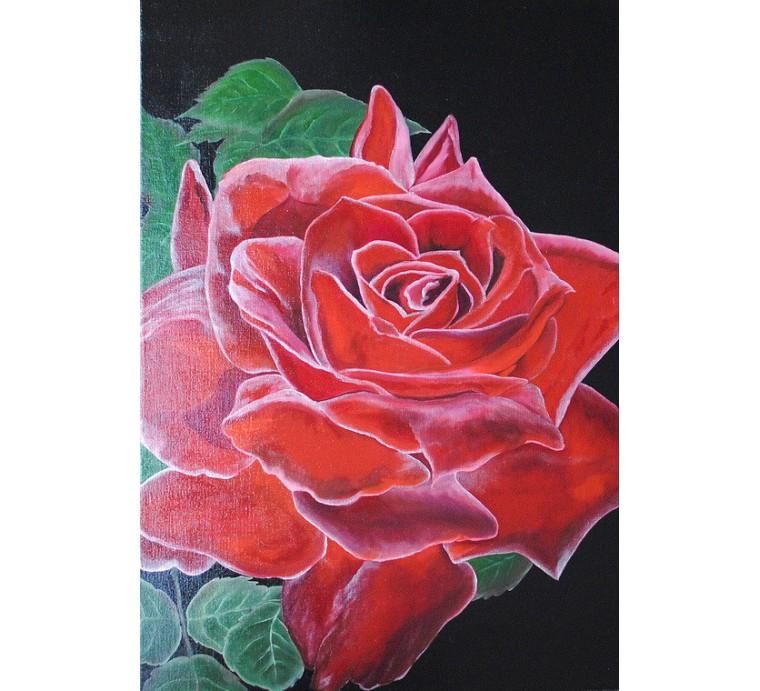 Czerwona róża (50x70cm)